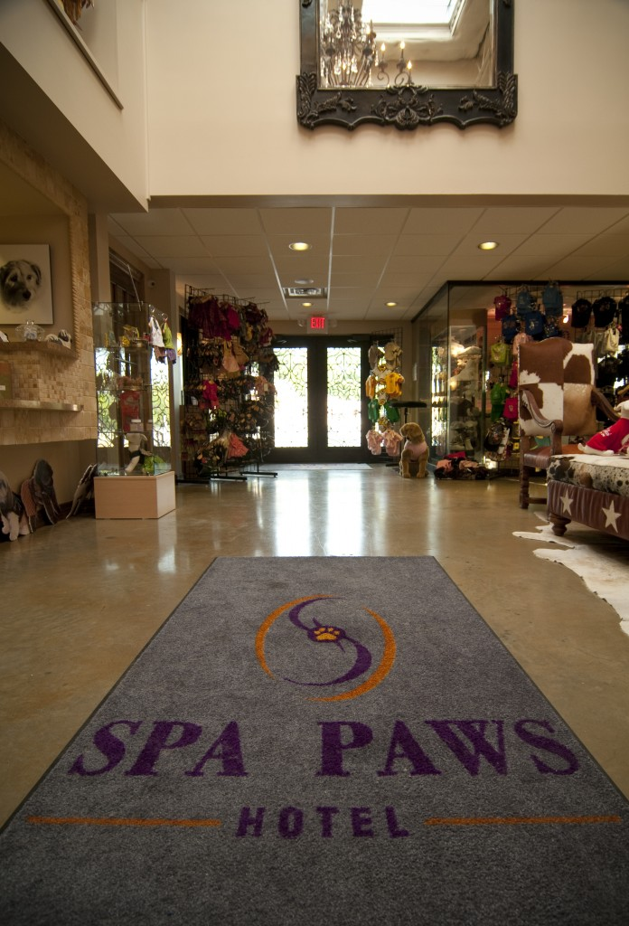 spa paws dog hotel