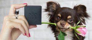 DogFever3