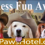 Spa Paws - Endless Fun Awaits
