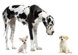 dog_daycare_dogs