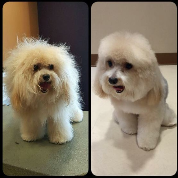 DGrooming before and after